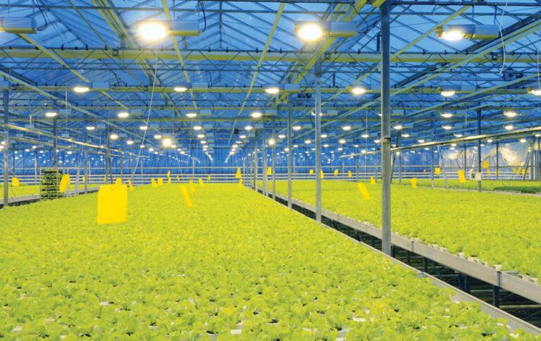 Используете ли вы дополнительное освещение для получения оптимальной урожайности?